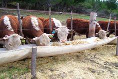 Más de 50 productores de la Cordillera ya se inscribieron en el programa de CORFO http://www.ambitosur.com.ar/mas-de-50-productores-de-la-cordillera-ya-se-inscribieron-en-el-programa-de-corfo/ Se trata de la iniciativa que prevé una inversión de 20 millones de pesos por parte del Gobierno para mejorar la producción de forrajes e incrementar la producción de carne, leche y lana.     Con marcadas expectativas, más de 50 productores nucleados en distintas asociaciones de l