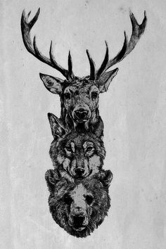 Deer, wolf and bear illustration