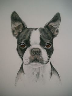 I miss my Boston Terrier, she was, is and always will be my baby