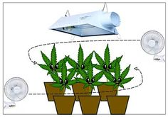 Proper air circulation is important to prevent cannabis problems. Setting up small fans in the grow space to move air above and below the plant canopy is a great way to make sure all plants are exposed to a breeze. Learn more about air circulation here: http://www.growweedeasy.com/exhaust