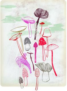 Fungi are more closely related to humans then they are to plants.