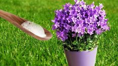 Put Baking Soda On Your Garden Plants and This will Happen - Watch Video - Garten Outdoor Plants, Outdoor Gardens, Garden Beds, Garden Plants, Flowering Plants, Container Gardening, Gardening Tips, Permaculture, Composting Process