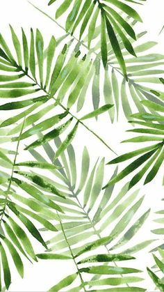 Watercolor palm leaves by gribanessa in emerald green. Beautiful summer palms p… Watercolor palm leaves by gribanessa in emerald green. Beautiful summer palms pattern available in gift wrap, wallpaper, and fabric. Bright green and. Plant Wallpaper, Tropical Wallpaper, Bathroom Wallpaper, Bathroom Art, Palm Leaf Wallpaper, Sunflower Wallpaper, Green Wallpaper, Leave In, Cute Wallpapers