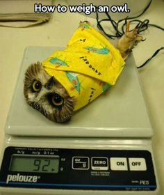 How to weigh an owl. That little wrap would come in handy. Looks fairly easy to make too.