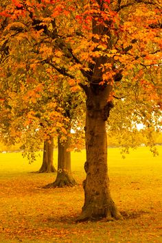 trees pictures | Autumn Trees In Park Free Stock Photo HD - Public Domain Pictures