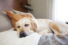 Dog-Friendly Hotels Catering To More Pet Owners With Special Perks