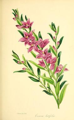 v.14 (1848) - Paxton's magazine of botany, - Biodiversity Heritage Library