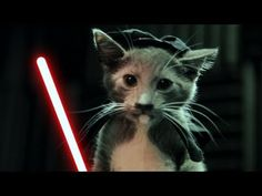 "Jedi Kittens Strike Back - ""Jedi Kittens Strike Back"" In my #cubicle giggling while watching this! TY for #kittens, #videoediting, & #starwars. Now today can begin."