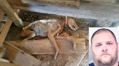 A Burke County, GA, man was arrested Jan. 7 after police officers found six hunting dogs died due to starvation on his property. Four other dogs were foun...