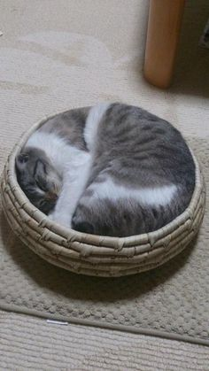 """There is nowhere a cat doesn't fit once it makes up its mind to be there! A skill I would like to acquire...at least psychologically... "" https://www.facebook.com/CrescentDragonwagonFearlessly"