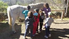 Actividades con caballos para colegios