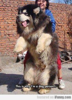 big doggy teddy bear