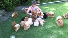 Coming home - Pomeranians very happy to see mom