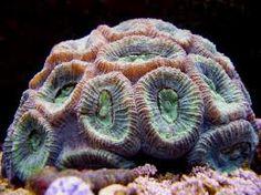 coral - Google Search