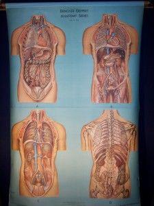 Old Anatomical Teaching Chart