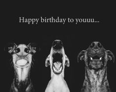 Here are some happy birthday meme dog We've put together for you which is a fantastic way to wish that friend who loves dogs and can't live without them. Happy Birthday Funny Dog, Birthday Meme Dog, Happy Birthday Quotes, Birthday Messages, Happy Birthday Wishes, Birthday Images, Birthday Greetings, Happy Birthdays, Birthday Cards