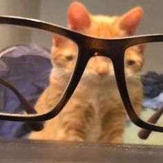 The place for puzzling perspectives, confusing angles, and missing context. Please read the rules to gain context on what we do here, and enjoy! Cute Little Animals, Cute Funny Animals, Funny Cute, Cute Cats, Baby Animals, Cat Memes, Funny Memes, Photo Chat, Cat Aesthetic