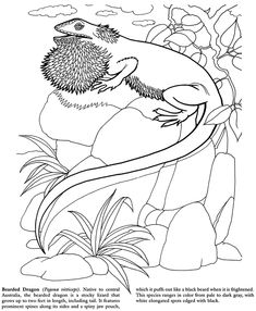 Cool Leo Lionni Coloring Pages