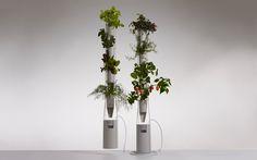 Mini indoor hydroponic farm
