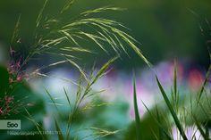 이름 모르는 잡초 - Pinned by Mak Khalaf Nature 빛색감야경역광잡초연꽃축제심도연꽃자연연목 by mandlgopa