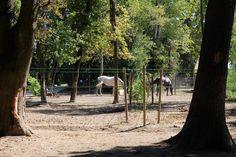 Chevaux Parc Alexis Gruss