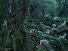Photographer Julia Fullerton-Batten Brings Unbelievable Stories Of Feral Children To Life | Welcome to the jungle.