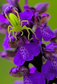 Colorful #Spider, http://500px.com/NinaohmanOjeda