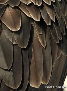 Craft Dad - Bald eagle feathers have feathers. Feathers consist of interlocking microscopic structures that are light, but very strong. Layers of feathers. Bald Eagle Feather, Eagle Feathers, Bird Feathers, Feather Drawing, Eagle Art, Coloured Feathers, Eagle Wings, Gaming Tattoo, Feathers