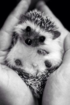My love of hedgehogs is Neverending.