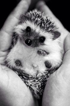 My love of hedgehogs is Neverending.