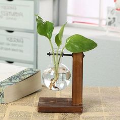 Hydroponic Glass Vase on a Wooden Plant Stand, Glass Planter, Water Plant Holder, Plant PropAgation Station, Plant Cuttings Propagation Vase Little Plants, Small Plants, Green Plants, Indoor Plants, Glass Planter, Glass Terrarium, Bulb Vase, Wooden Plant Stands, Plant Cuttings