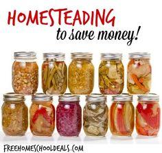 Homesteading to Save Money