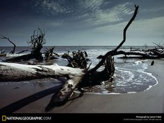 Troncos en la Playa