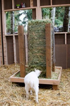 Square bale hay feeder for goats