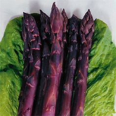 Sweet Purple Asparagus Seeds:  Don't let the long growth time of this perennial vegetable discourage you; Sweet Purple Asparagus will produce heavily and dependably for up to 15 seasons! This is a vegetable for your permanent garden, asking only well-drained fertile soil receiving sunshine and water. Begin this gourmet (and exceptionally healthful) crop today, and enjoy the results for more than a decade to come!