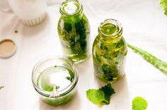 Melisse, auch wegen ihres Geruches Zitronenmelisse genannt, ist auch eine Heilpflanze, die sich bestens für selbstgemachte Naturkosmetik eignet.