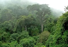 Knysna Forest in Knysna, Garden Route. Across Africa are only a handful of sheltered, remote pockets of Afromontane forest; Knysna, Kruger National Park, National Parks, African Jungle, South Afrika, Garden Route, Out Of Africa, Africa Travel, Places To Go