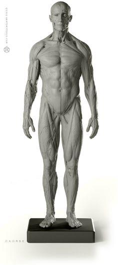 AnatomyTools.com http://www.posemaniacs.com/ 포즈 매니악 dailybandha.com