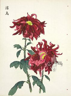 One hundred Chrysanthemums by KEIKA series. KEIKA Hasegawa