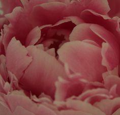 dazzlingagony:  Pink photography by Olga Drokina