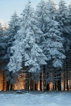 ♕ insta and pinterest @amymckeown5 #LandscapeForest