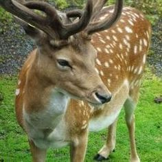 Kinderealm: White-tailed Deer at Goodyear Heights Metro Park Akron, OH #Kids #Events