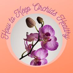 Moth Orchid, Orchid Care, Growing Orchids, Growing Flowers, Indoor Orchids, Indoor Plants, Container Gardening Vegetables, Vegetable Garden