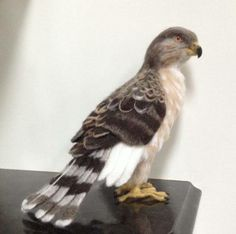 A personal favorite from my Etsy shop https://www.etsy.com/ca/listing/384374780/needle-felted-juvenile-coopers-hawk