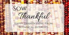 """Over 20 years ago, the seeds of a dream were sown to provide high-quality products and gardening education. We are sincerely grateful for the thousands of customers who have taken this leap of faith and are growing with us on the journey. Thank you for your constant inspiration and support through the years—these are the gifts we are """"sow"""" thankful for, this, and every year.  Sincerely, Judy and Curtis"""