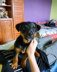 Pociecha całej rodziny- Ferdek  #today #my #love #little #dog #cute #dogsofinstagram #photooftheday #photography@v_lka by stilloves