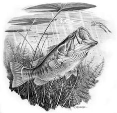 Image result for freshwater fish drawings