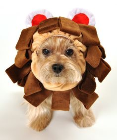 Kid's second choice is tamer+lion. Look at this #zulilyfind! Brown Lion Head Dog Costume by Anit Accessories #zulilyfinds