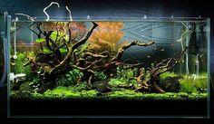 Aquascape (@aquascapenl) в Instagram: «Such a cool scape ------------------------------------------------ #aquascape #aquarium #aqua…»