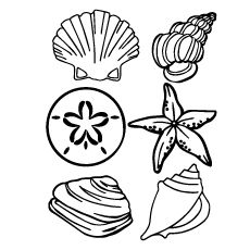 Are you in search of wondrous pre-reading activity which helps your kid to develop their learning skills? Check out our free printable shell coloring pages. Beach Coloring Pages, Fish Coloring Page, Free Coloring Sheets, Mermaid Coloring, Animal Coloring Pages, Coloring Book Pages, Pre Reading Activities, Hello Kitty Coloring, Page Online